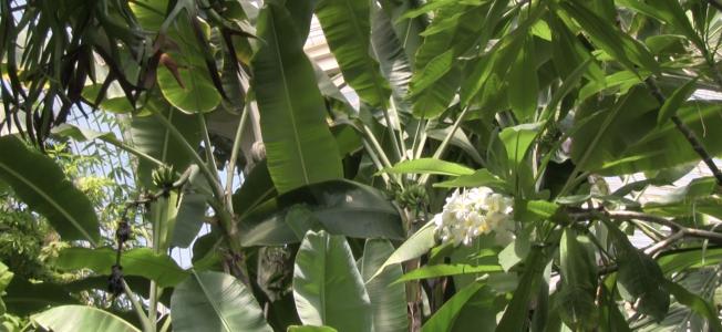Daniel Dressel, Lynne Kouassi, Habitat, 2019, Video Still